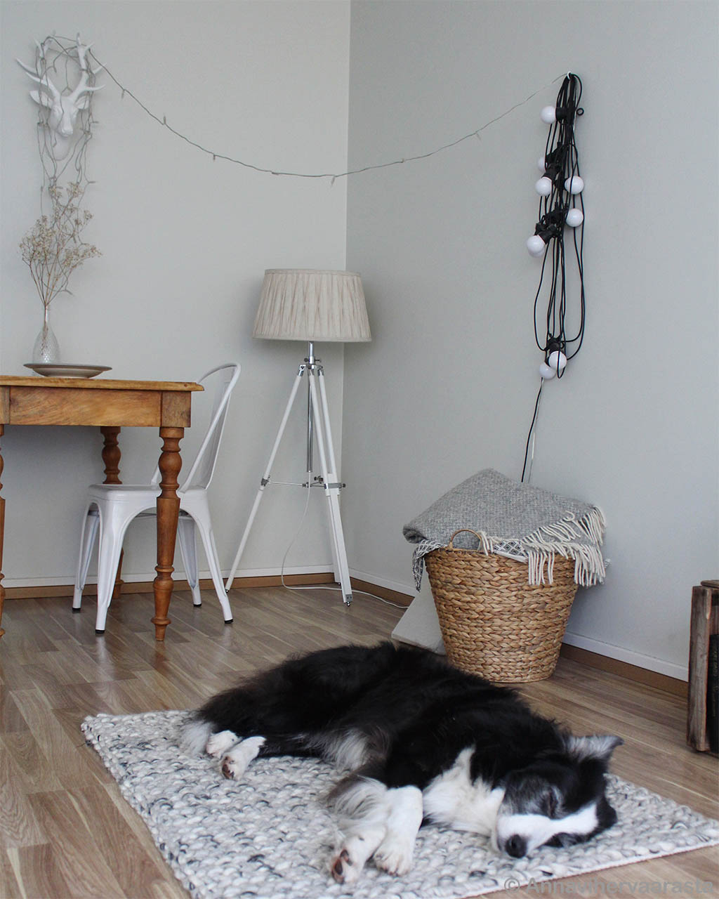 handmade basket and black dog indian rugs