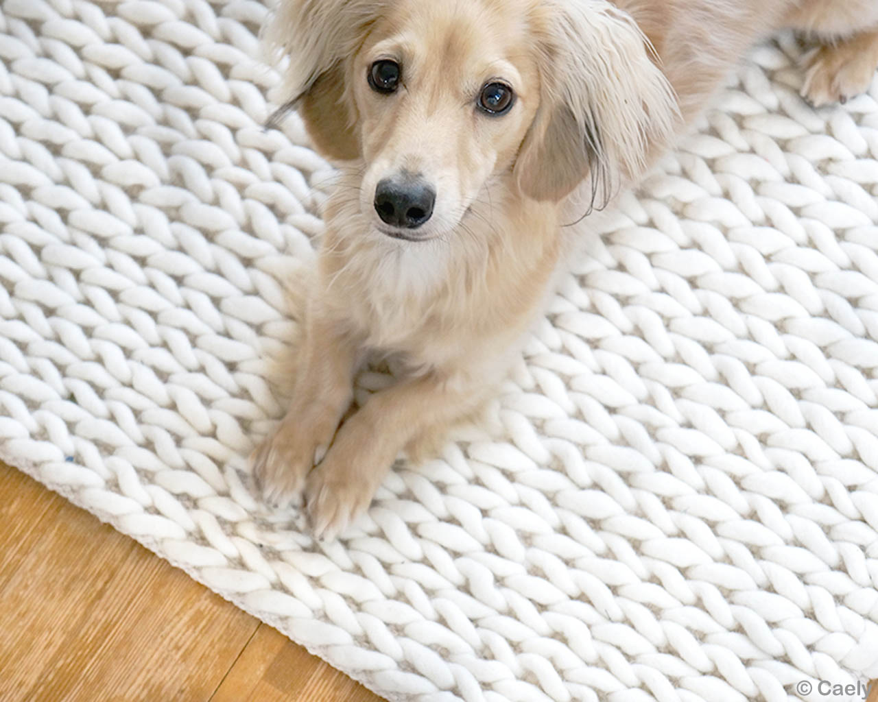 sitting dog contemporary beautiful white felt rugs